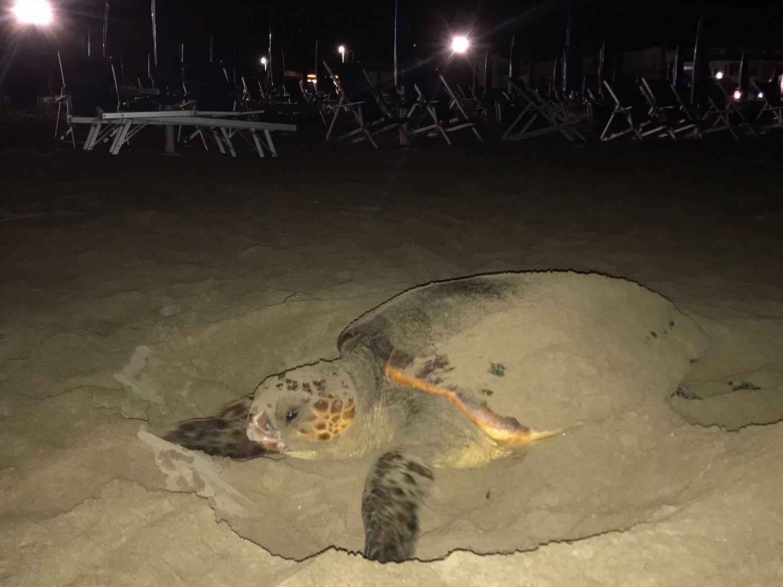 Tartaruga marina depone le uova: spiaggia off limits per i bagnanti